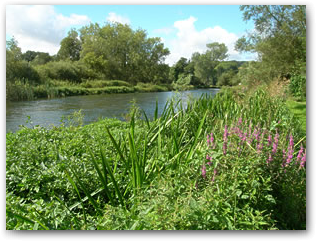 River Avon, Woodford